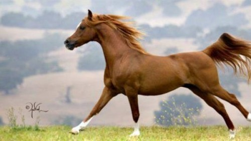 تفسير حلم الخيول في المنام