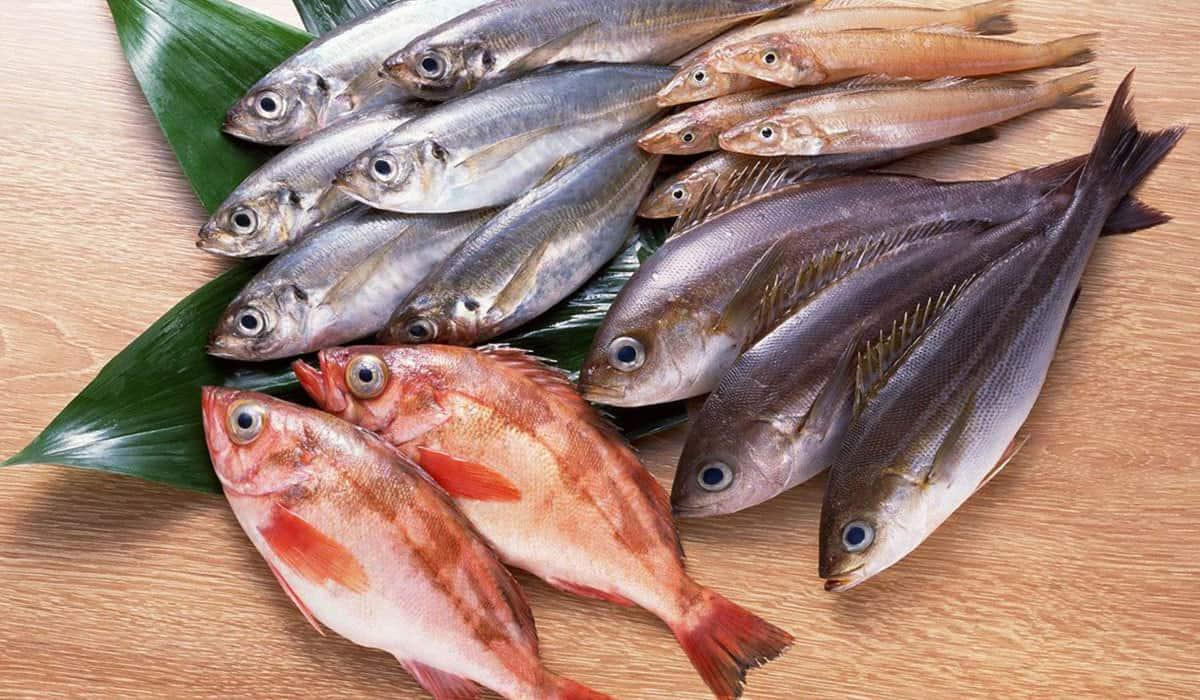 رؤية السمك النيء في المنام للعزباء موقع النفاعي