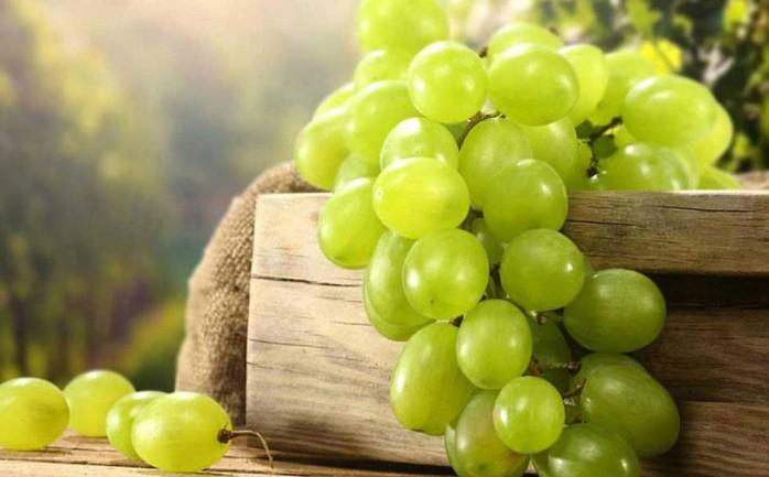تفسير حلم العنب الأخضر في المنام