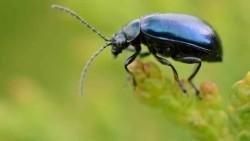تفسير حلم الحشرات السوداء
