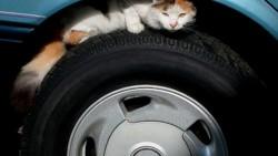 تفسير حلم دهس قطة بالسيارة في المنام