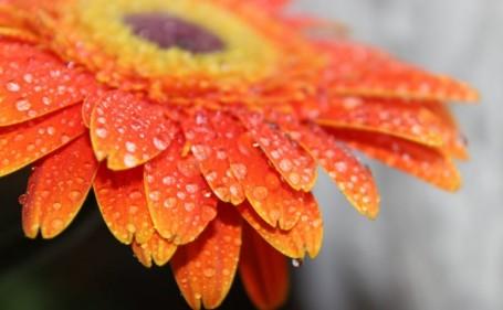 تفسير حلم اللون البرتقالي في المنام