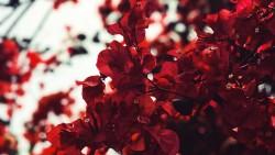 تفسير حلم اللون الأحمر في المنام
