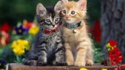 اسماء قطط حديثة 2021