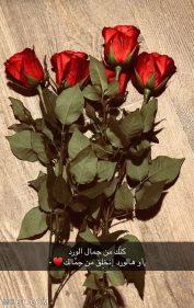 عبارات عن الورد الأحمر